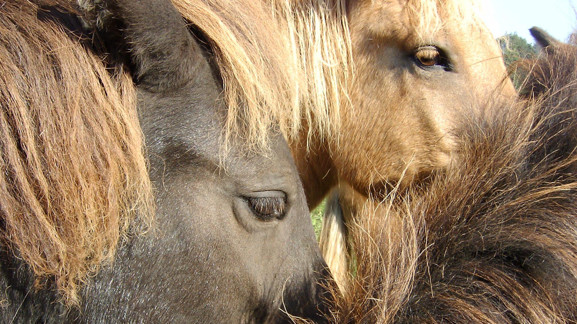 Islandpferdehof-Weihungstal